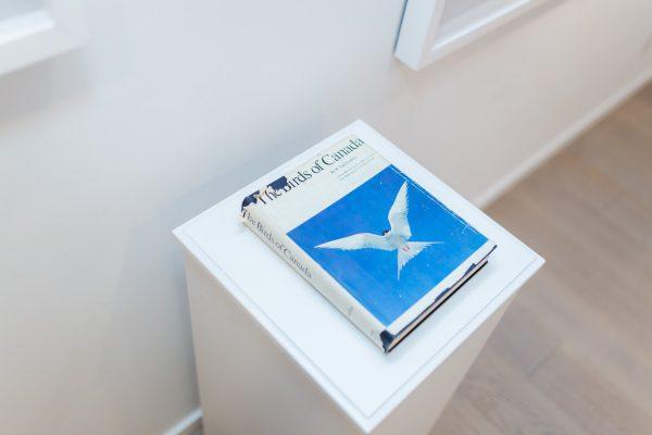 News, Peter Andrew Lusztyk, Taglialatella Galleries, Toronto, Exhibition, The Birds of Canada